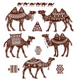 set of stylized figures of camels vector image vector image