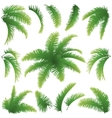 Branches of palm trees vector | Price: 1 Credit (USD $1)