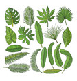 colored pictures set of tropical leaves vector image
