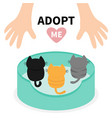 adopt me kittens looking up to human hand cat bed vector image vector image