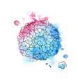 beautiful blue and pink hydrangea vector image vector image