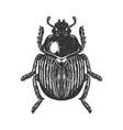 scarab beetle engraving vector image vector image