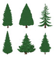 set cartoon pine trees on white background vector image vector image