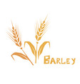 wheat or barley ear cereal plants agriculture vector image vector image
