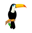 toucan bird icon vector image