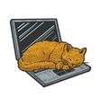 cat sleeping on laptop sketch vector image vector image