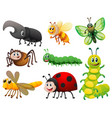 different kinds of small insects vector image vector image