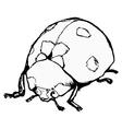 ladybird vector image vector image
