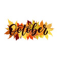october script with decorative maple vector image vector image