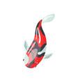 shova carp koi fish traditional sacred japanese vector image