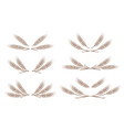 wheat ears design elements set vector image vector image