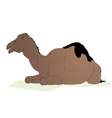 lying camel vector image