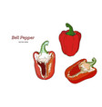 pepper hand drawn set vector image vector image