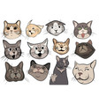 set funny cats collection portraits of vector image vector image