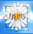 chamomile spring flower on blue background vector image vector image
