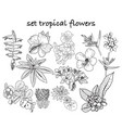 collection of hand drawn tropical flowers leaves vector image vector image