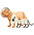 Dog and cat with collars vector image vector image