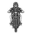 vintage angry gorilla head biker vector image vector image