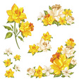 gentle floral set flower elements isolated vector image vector image