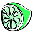 green lime on white background vector image vector image