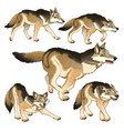 group of isolated wolves vector image