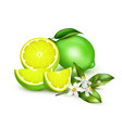 lemon lime realistic composition vector image vector image