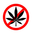 no drugs red forbidden sign with marijuana leaf vector image