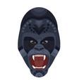 angry wild ferocious gorilla screaming head logo vector image