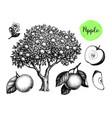 apple sketch set