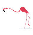 elegant pink flamingo vector image vector image