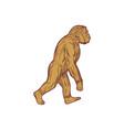 homo habilis walking side drawing vector image vector image