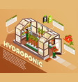 hydroponic isometric composition vector image vector image