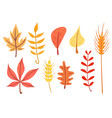 simple flat autumn leaves set vector image vector image