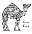 Stylized camel zentangle isolated on white vector image vector image