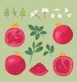 summer set with sweet pomegranates leaves and vector image