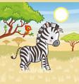 zebra is standing in savannah vector image vector image