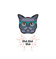 grey cat in smart glasses vector image