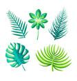leaf exotic plants set vector image vector image