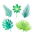 leaf of exotic plants set vector image vector image