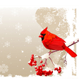 Red cardinal bird background vector | Price: 1 Credit (USD $1)