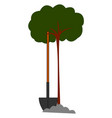 young little tree on white background vector image vector image