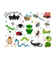 Cute insects reptiles Bee grasshopper vector image