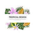 tropical design banner template with bright exotic vector image vector image