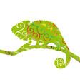 chameleon lizard reptile spiral pattern color vector image