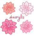cute amaryllis set colorful hippeastrum vector image vector image