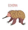 echidna cartoon animal from australia vector image