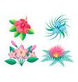 frangipani flower blossom set vector image