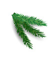 spruce branch isolated on white background green vector image vector image