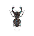 stag beetle insect spiral pattern color silhouette vector image vector image