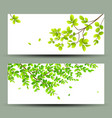 tropical green leaves banners collections vector image vector image